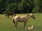 Penn Valley mother and foal