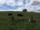 Penn Valley ranches