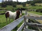 RR-horse