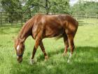 rhr-horse